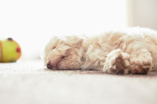 ペットにやさしい床材